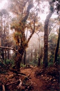 CostaRica-CerroChirripo-brume